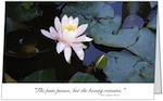 Water Lily Sympathy Card